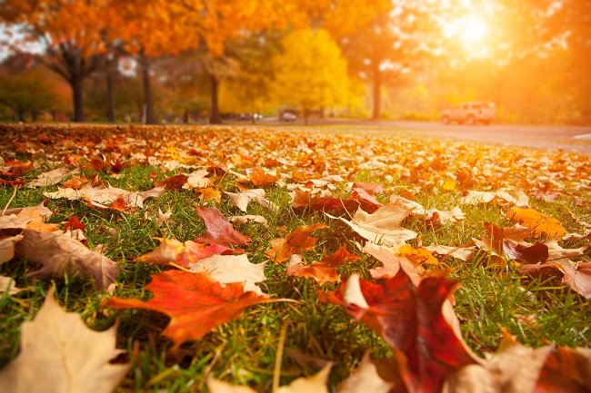 Fall and Winter Commercial Lawn Maintenance