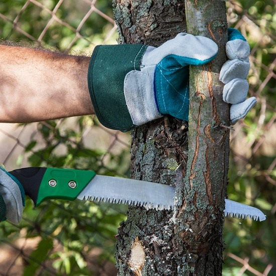 Learning More About Tree Pruning