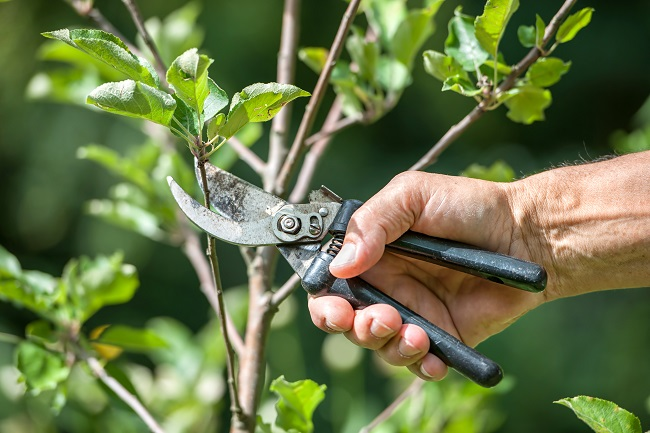 The Top Five Benefits of Tree Pruning