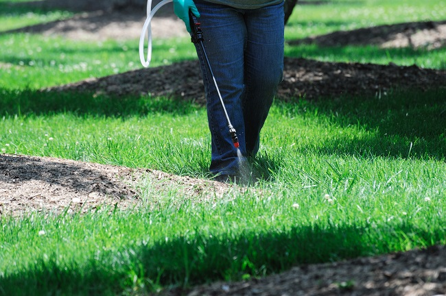The Importance of Fertilizing Your Lawn