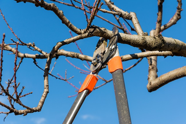 Top 3 Tree Pruning Mistakes to Avoid This Year