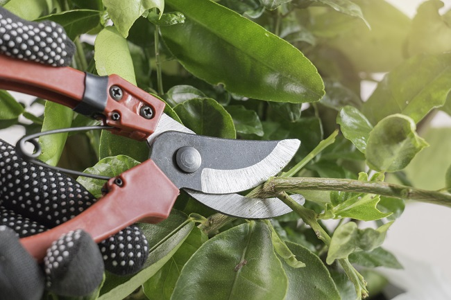 4 Things to Know About Pruning Trees and Shrubs