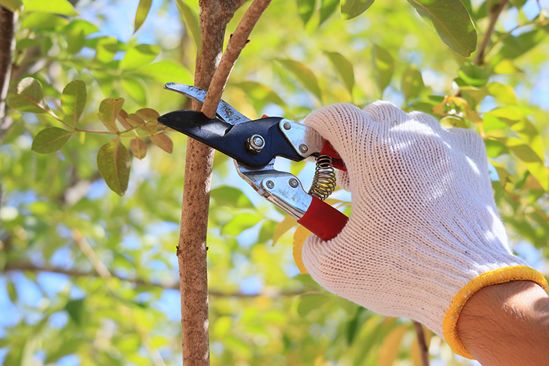 Why You Should Hire Professionals To Prune Your Trees
