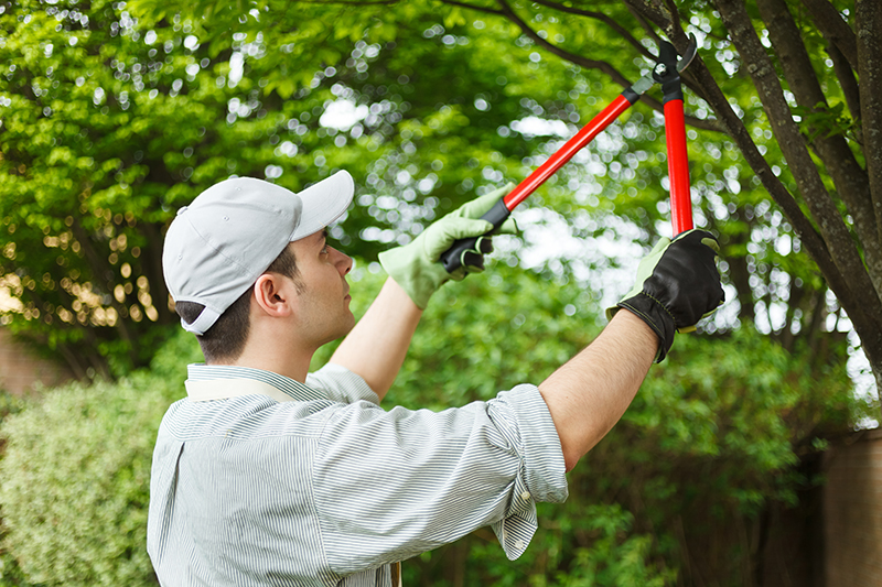 Importance of Tree Pruning